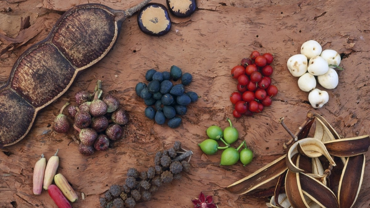 Australia needs to embrace its bush tucker munchies for Aboriginal cuisine
