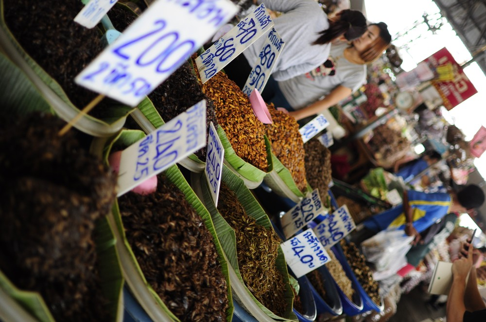 An assortment of edible insect species found at the Talaad Thai market outside of Bangkok