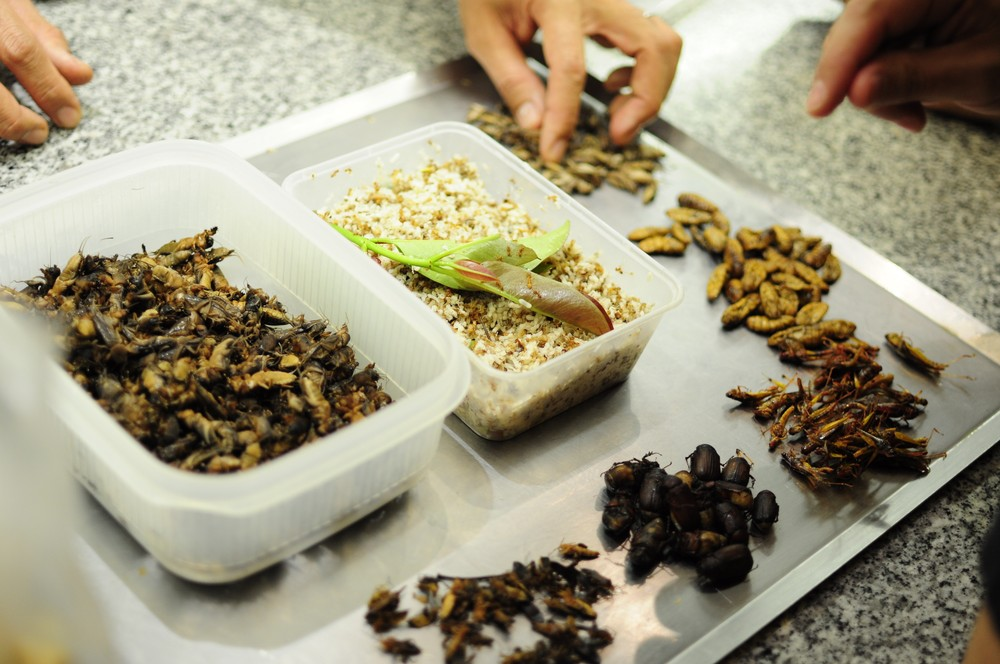 An assortment of edible insect species from northeastern Thailand