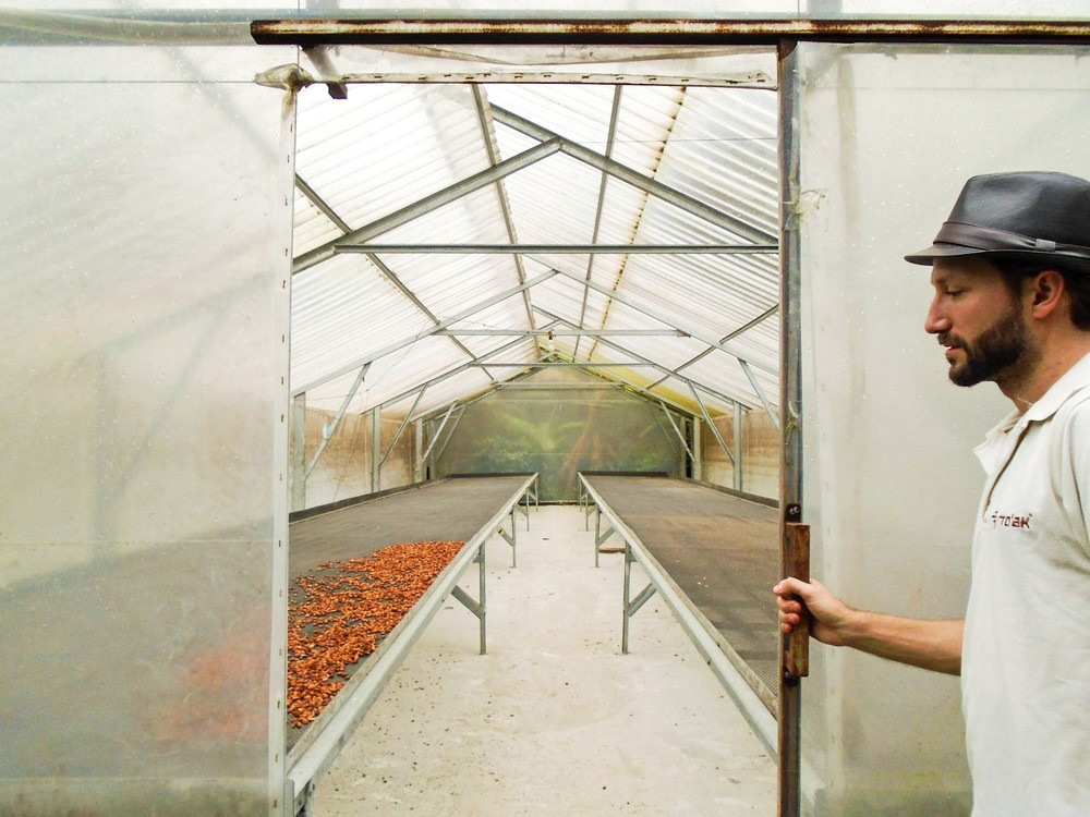 Cacao is placed in a solar dryer