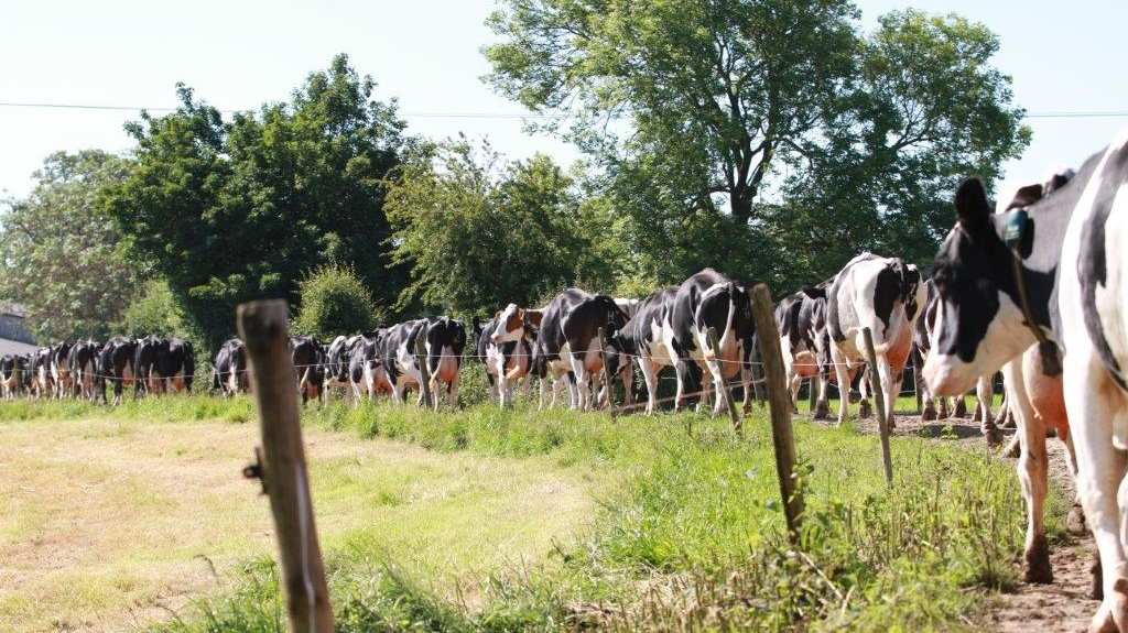charlie-hughess-cows-at-southview-farm-dairy-west-sussex-1
