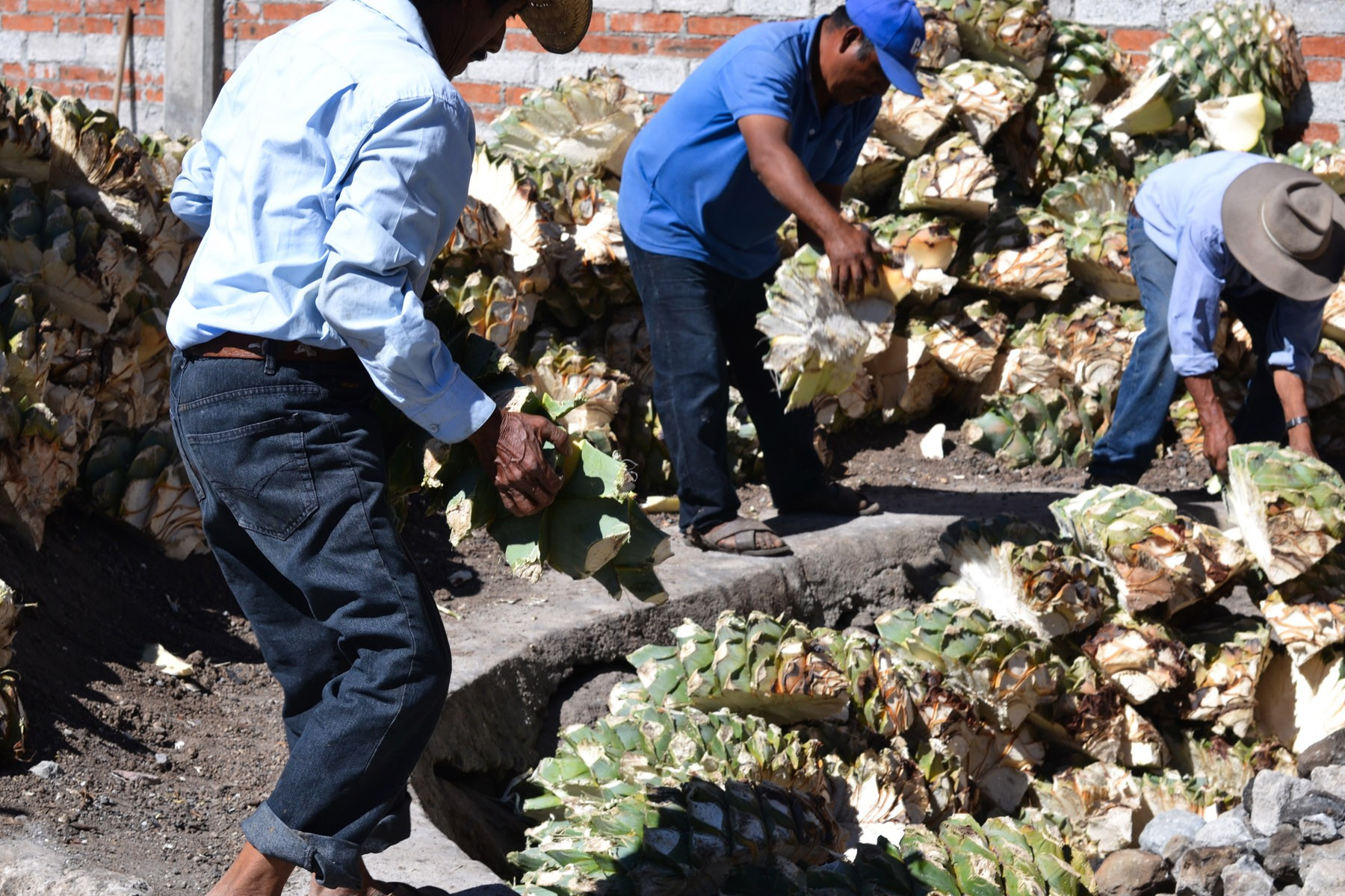 distillery-workers-fill-the-roasting-pit-with-agave-hearts