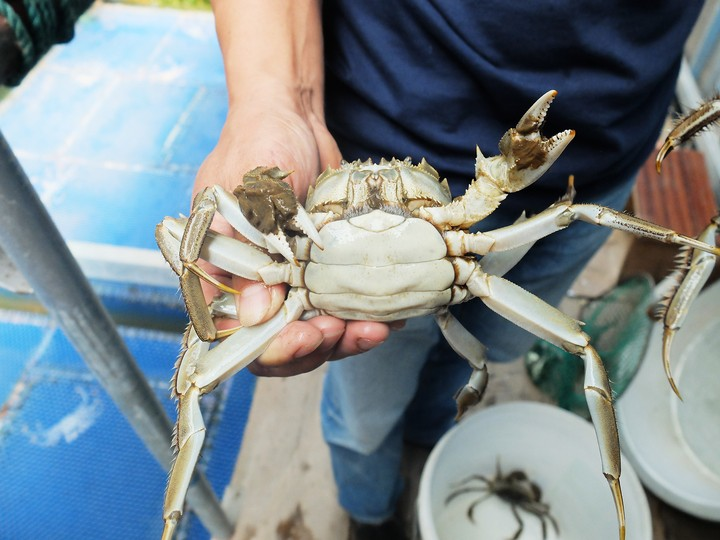 Hairy Crabs Have Taken Over East China - MUNCHIES