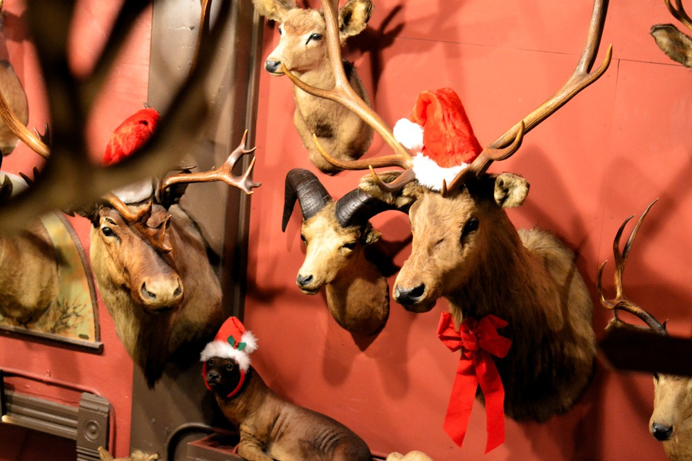 festive-taxidermy-at-buckhorn-exchange