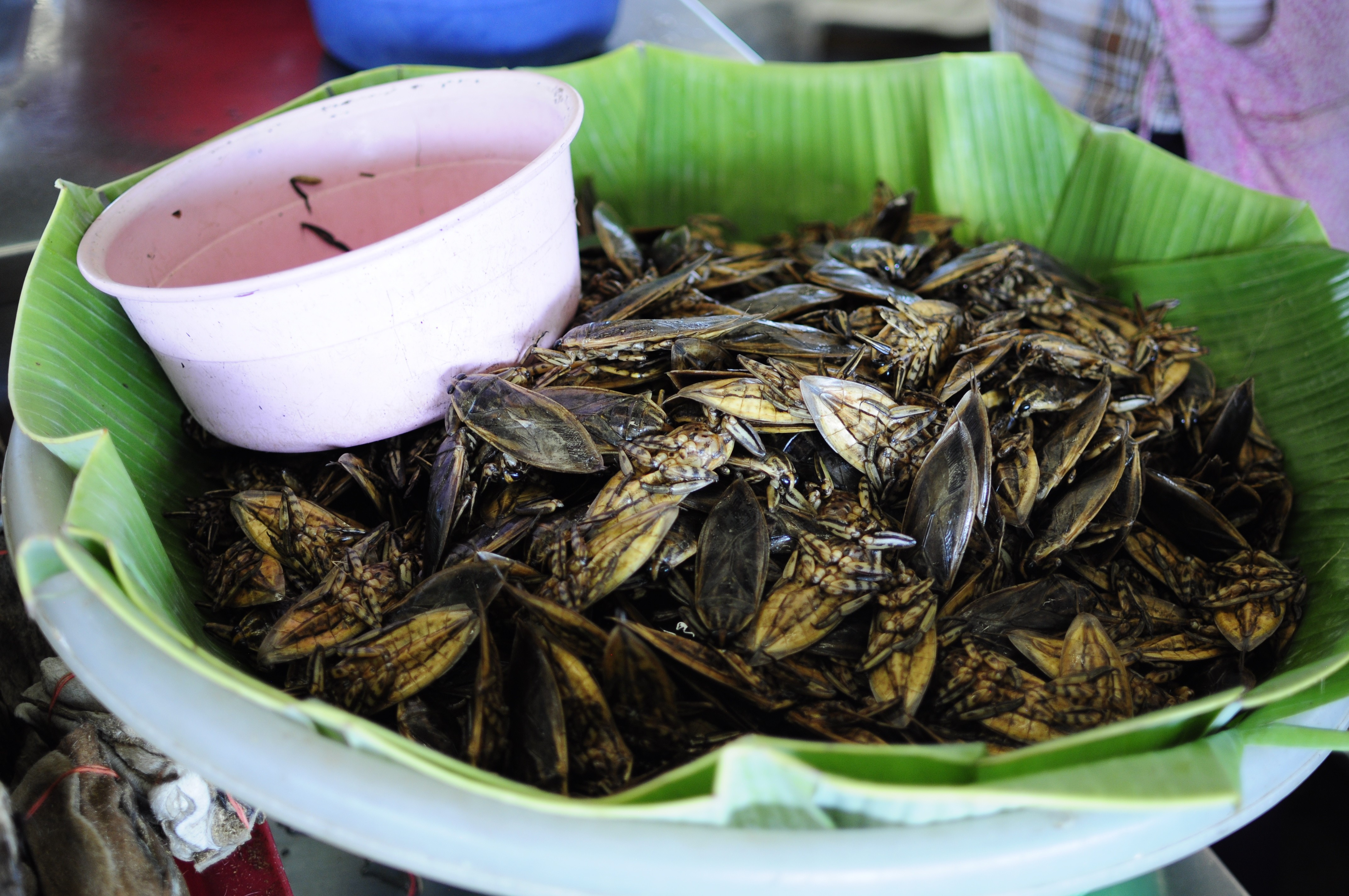 Giant water bugs for sale at the Talaad Thai market