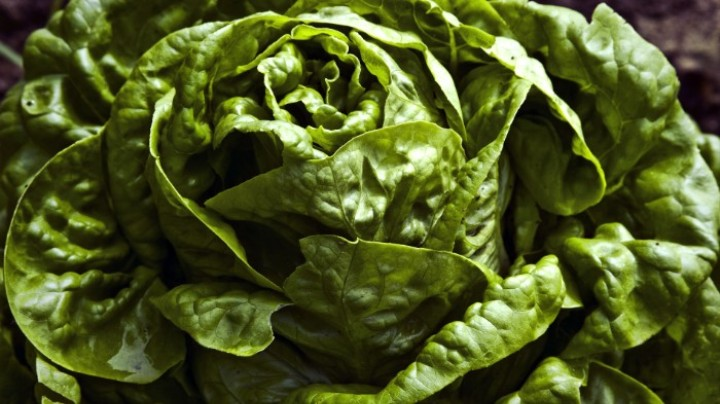 This Robot-Run Farm Can Harvest 30,000 Heads of Lettuce a Day