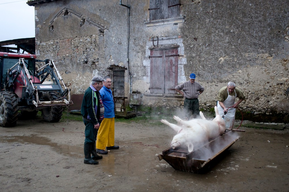 14/01/2014 - France / Aquitaine - Le boucher utilise un chalumeau pour enlever les derniers poils de la carcasse qui repose dans la maie en bois (meyt en gascon). Le tue-cochon, ou fete du cochon, est une tradition des campagnes francaises, qui correspond a l'abattage, la decoupe et la cuisine de la viande de porc. Autrefois moment important de la vie rural, cette tradition se perd aujourd'hui. Simon Lambert / Haytham Pictures 14/01/2014 - France / Aquitaine - Kill the pig - The butcher uses a blowtorch to burn the last hair remaining on the pig in the wooden bread box. Simon Lambert / Haytham Pictures