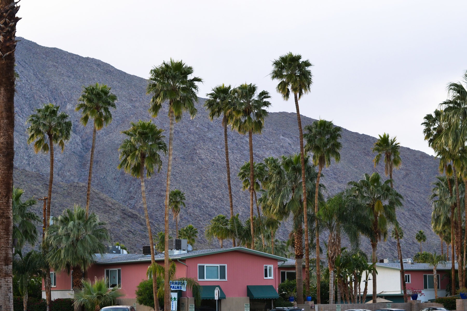 The Coachella Valley grows more than just palm trees.