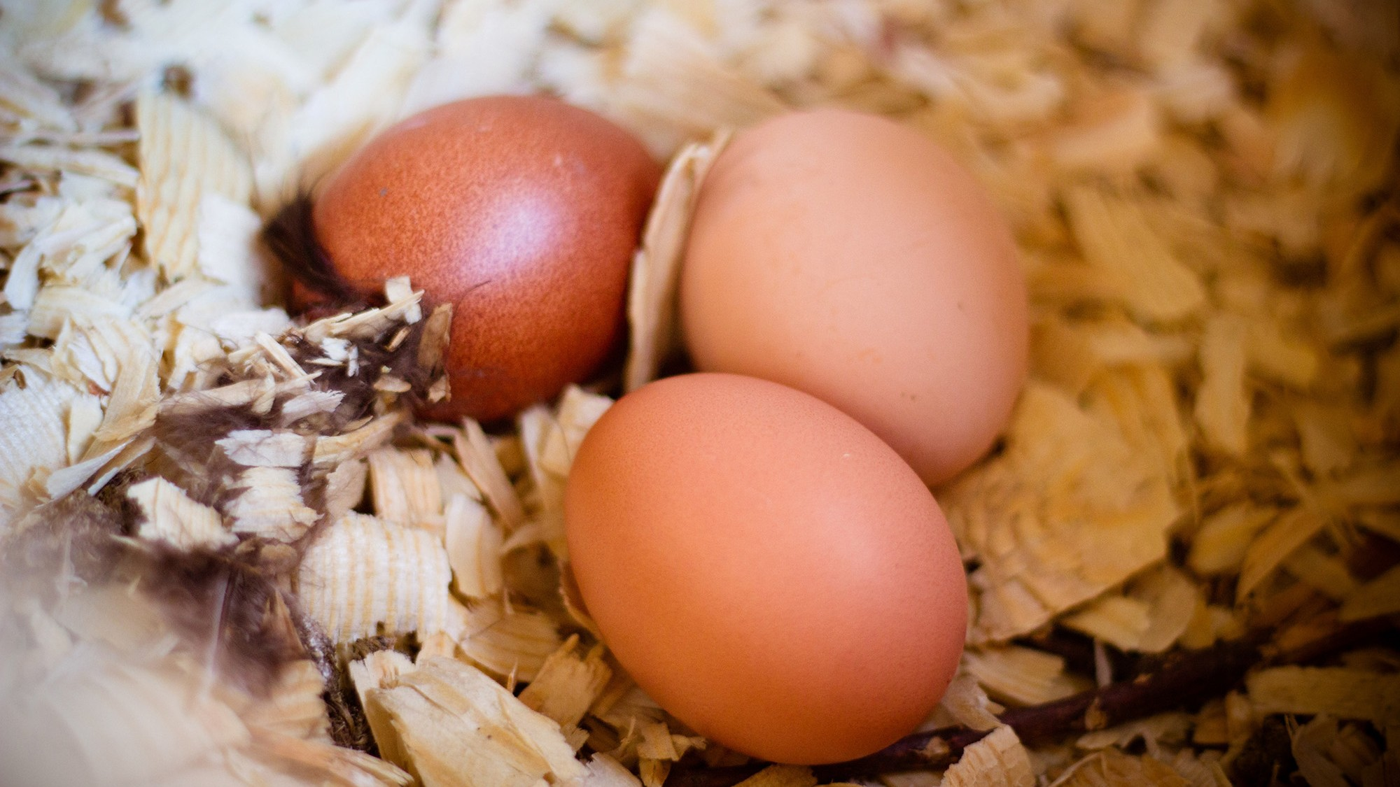 your farmers u0027 market eggs are more likely to make you sick munchies