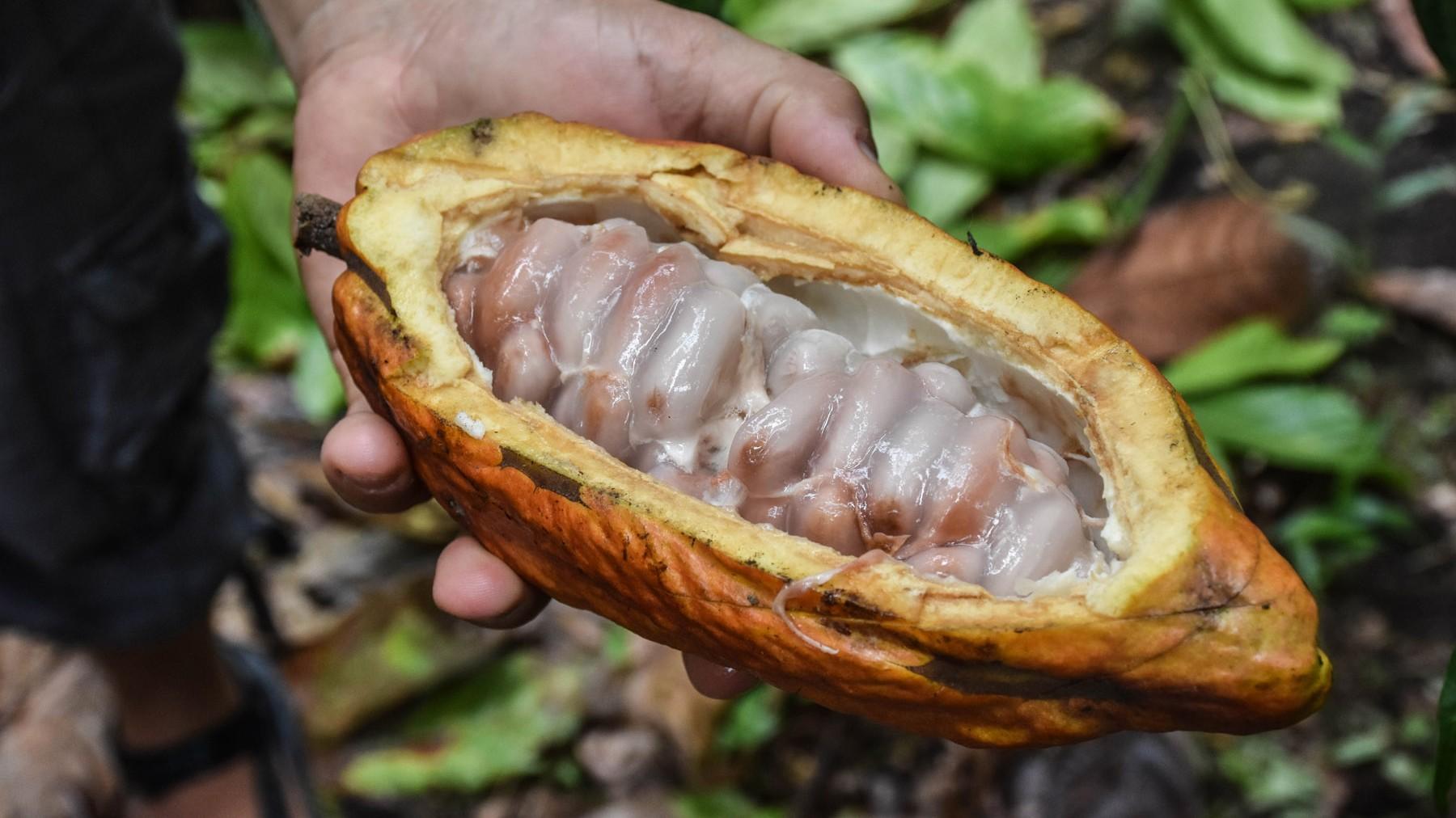 cacao_31683185303_o