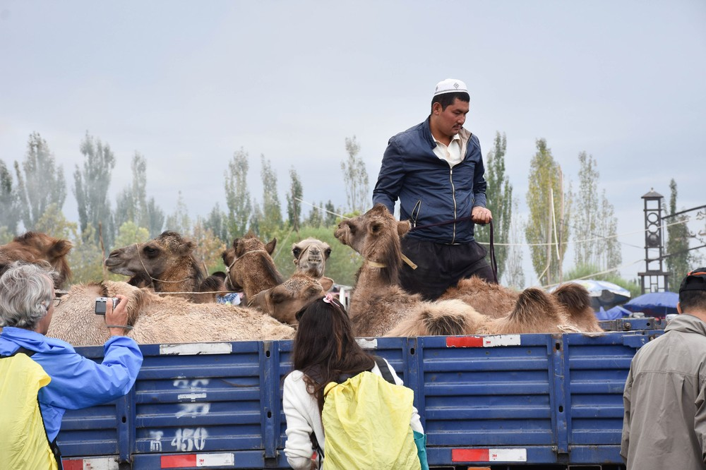 camels-from-kashgar-in-xinjiang_29179580696_o