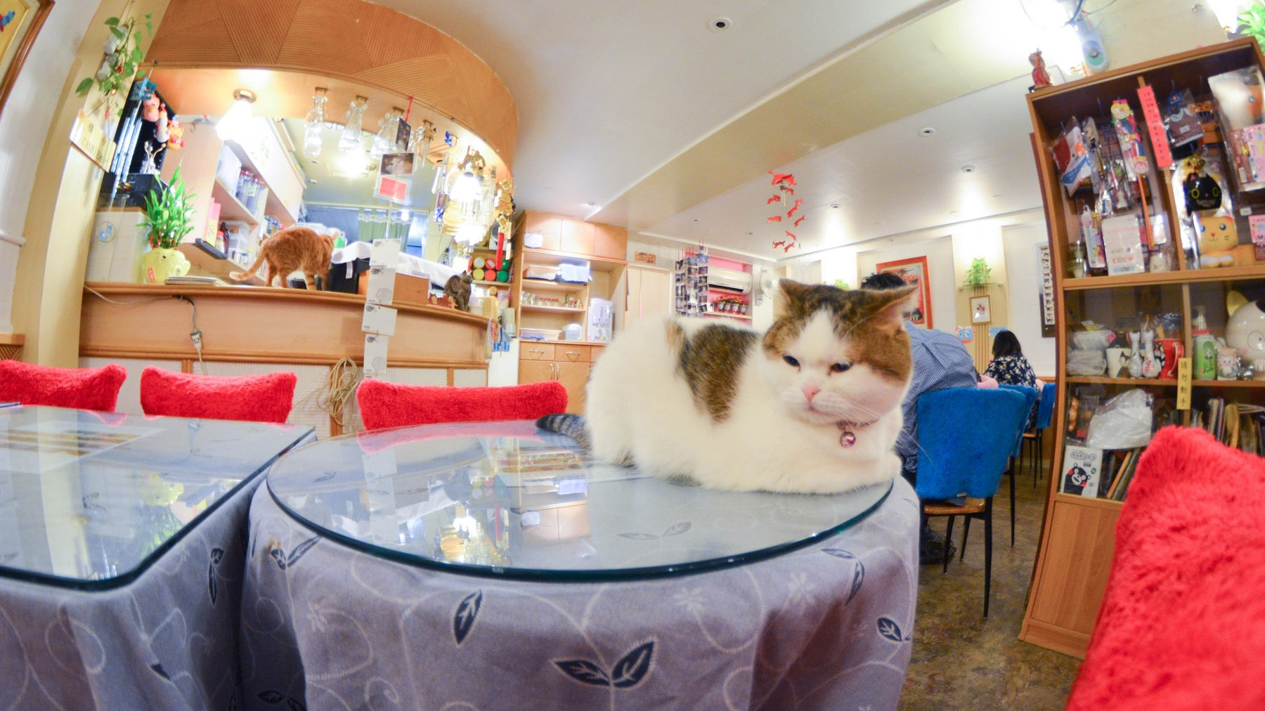 The World's First Cat Cafe