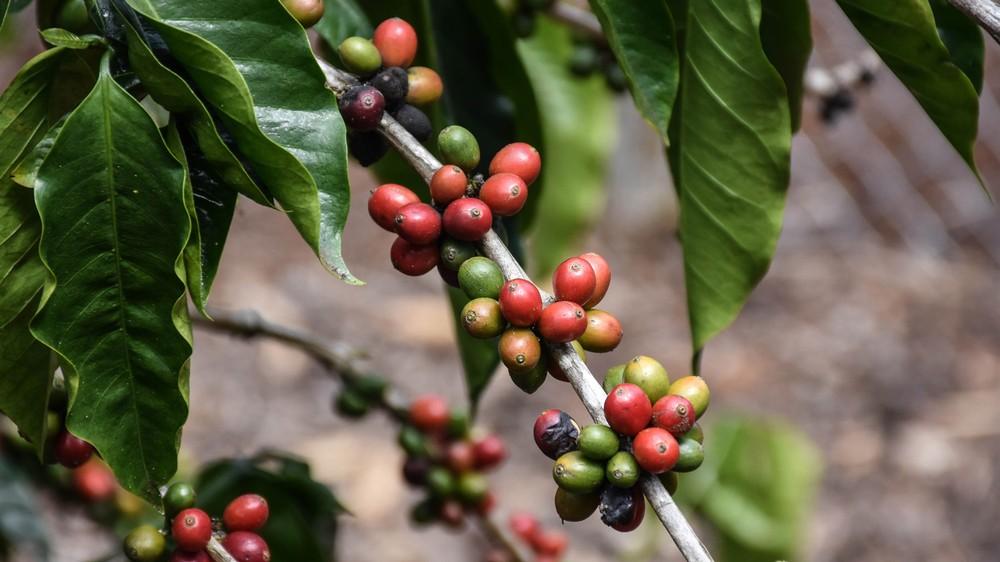coffee-beans_31101809113_o