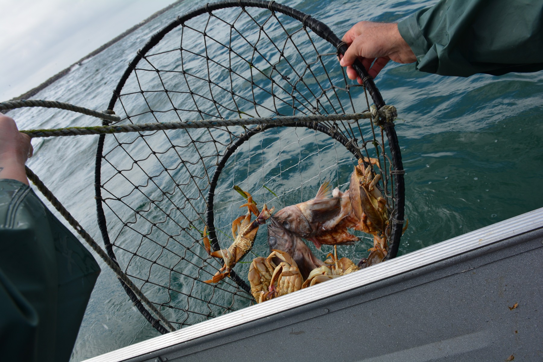 crab_in_basket - 1
