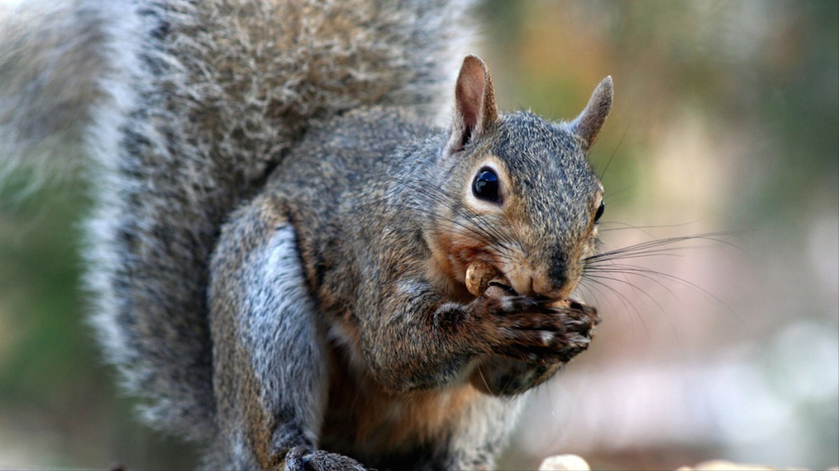 We Should Think About Eating Squirrel MUNCHIES - Cat squirrel playing cutest thing youll see day