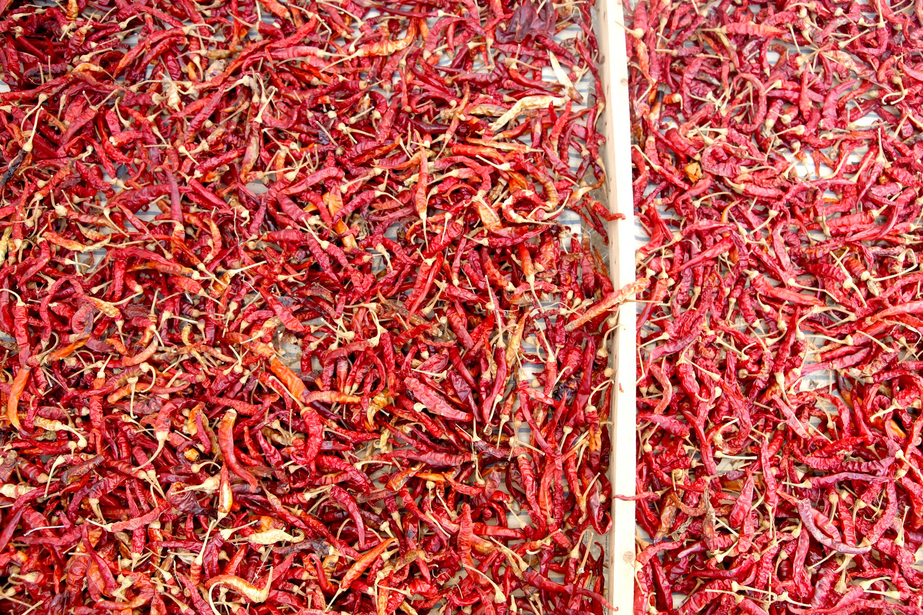 dried-peppers-for-harissa