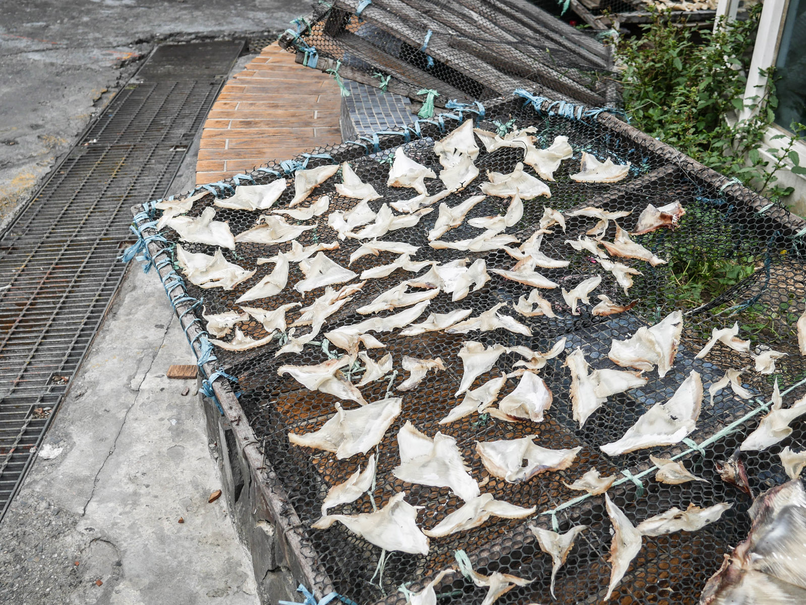 dried-shark-fin_25878369680_o