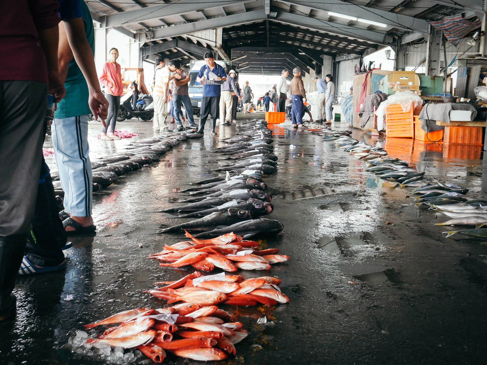 fish-from-fish-market_26058786942_o
