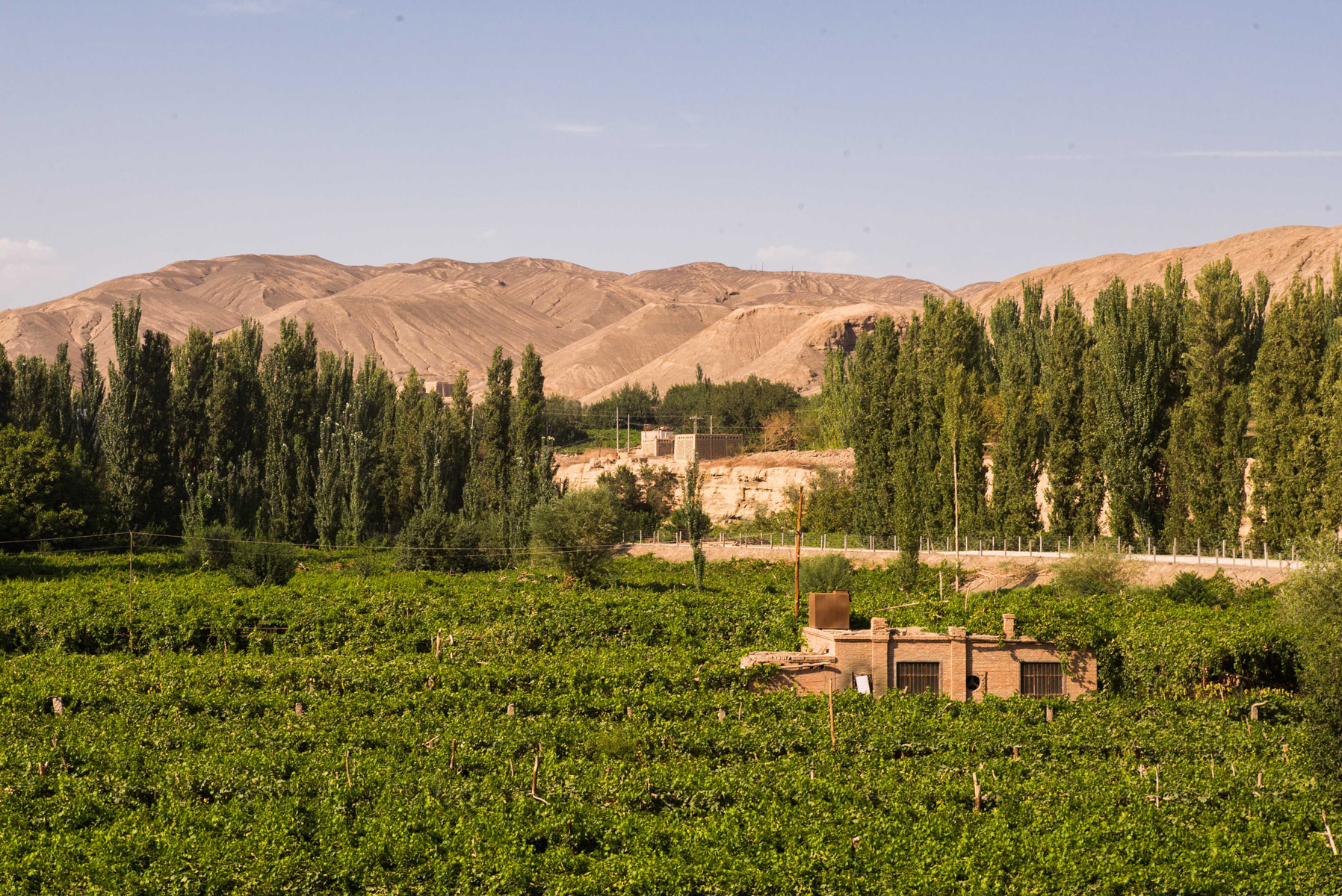 grape-vines-and-mountains_28432301970_o