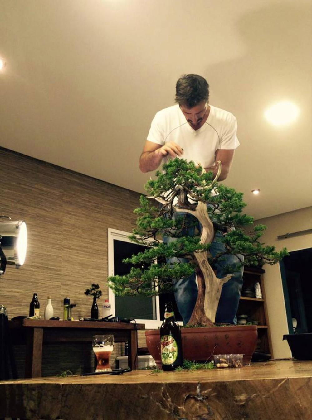 heroicabonsai_Bonsai - Bonsai Master