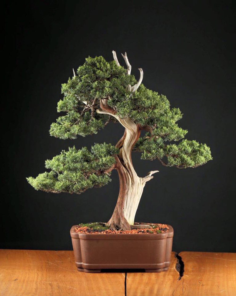 This Brazilian Brewer Is Making Beer Out of $20,000 Bonsai ...