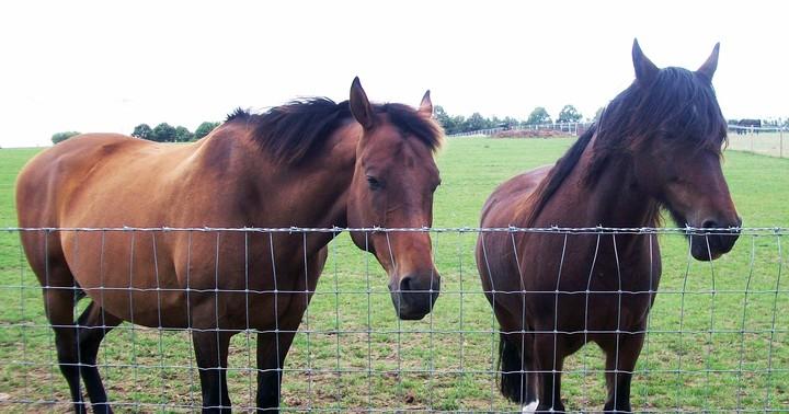 50,000 Horses Disappeared During Europe's Meat Fraud Scandal