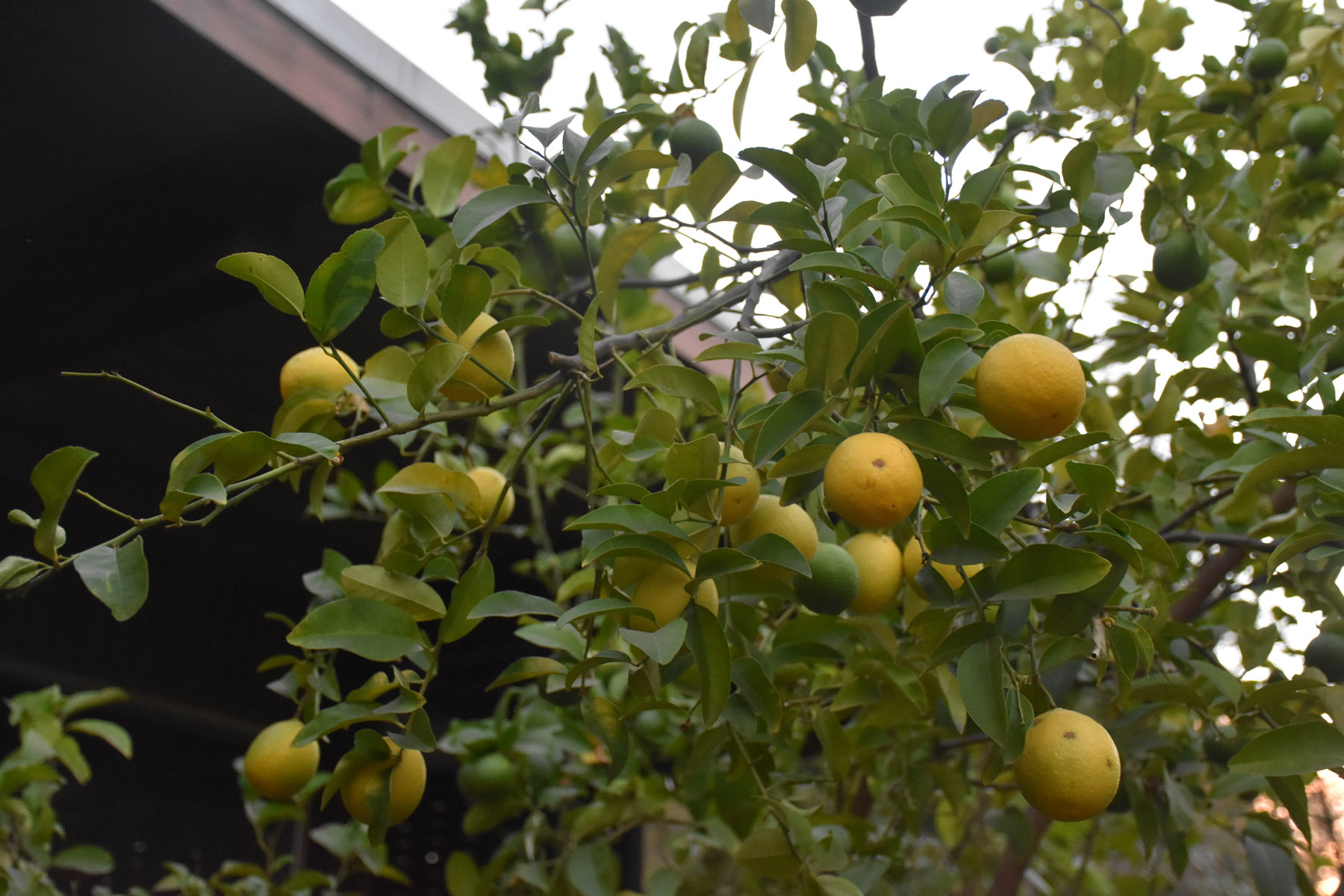 lemontree-offsite-garden_29310538534_o