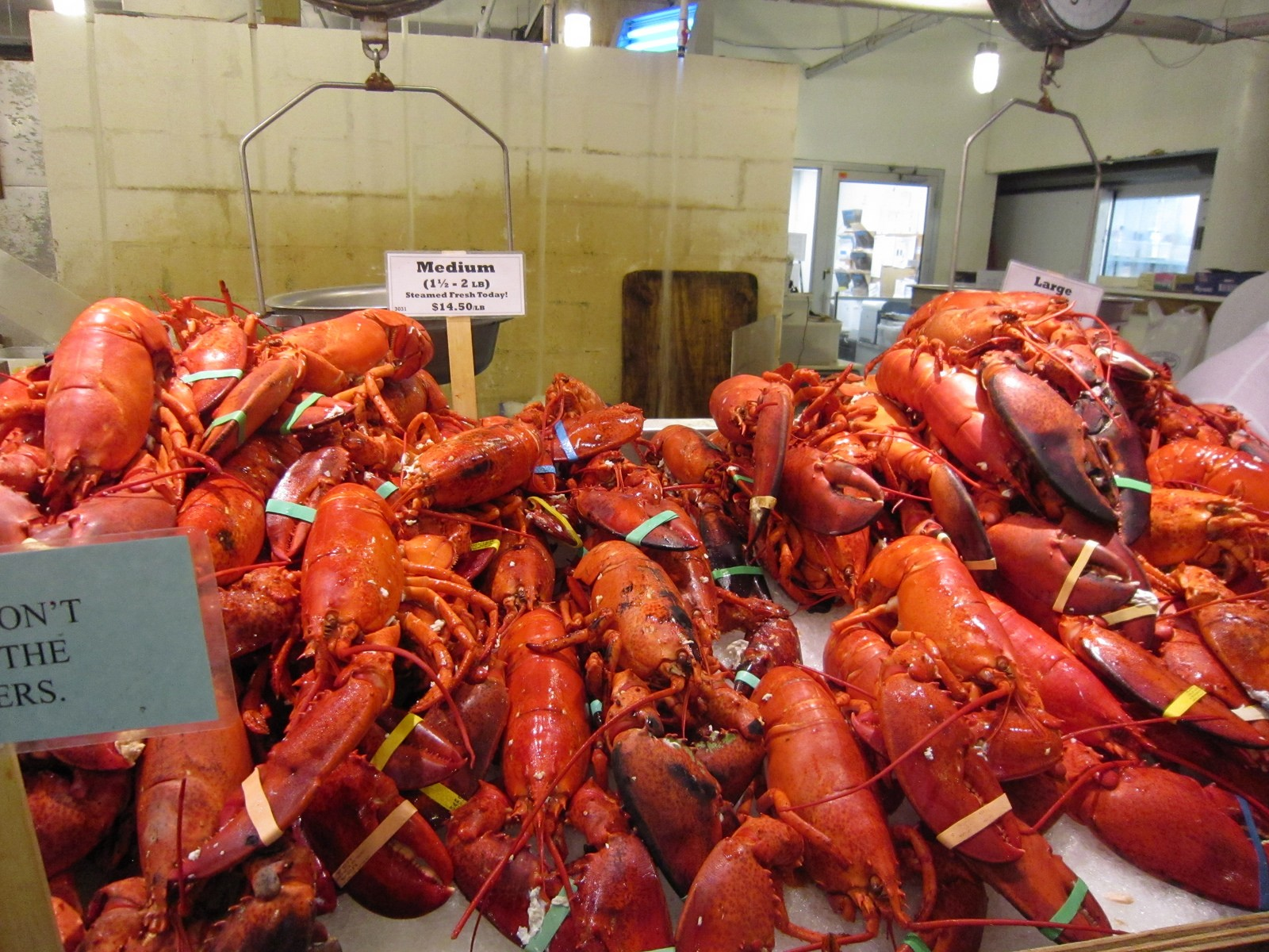 lobsters-on-display