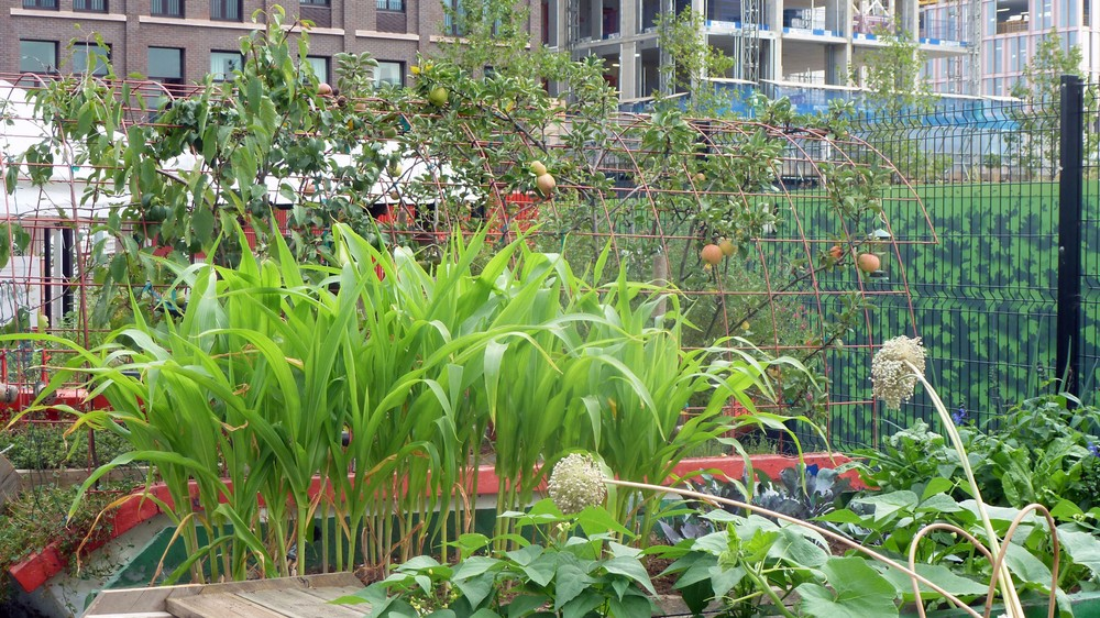 How this community vegetable garden reclaimed a london for Gardening volunteering london