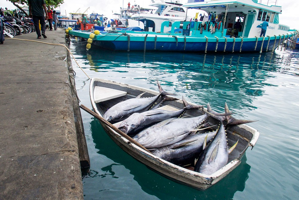 It 39 s all about the tuna at this fish market in the for Tuna fishing boats for sale