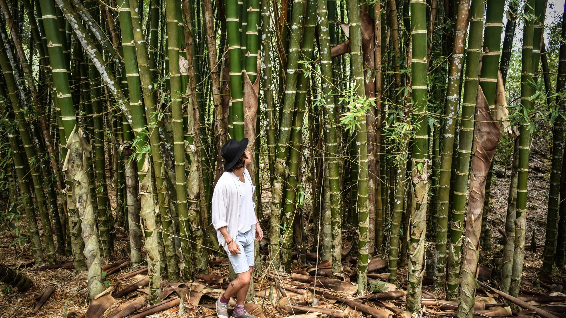 nico-with-bamboo-forest_31101794453_o