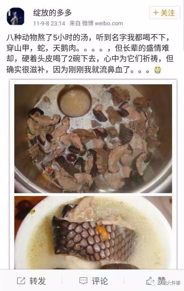 pangolin-princess-stew-weibo