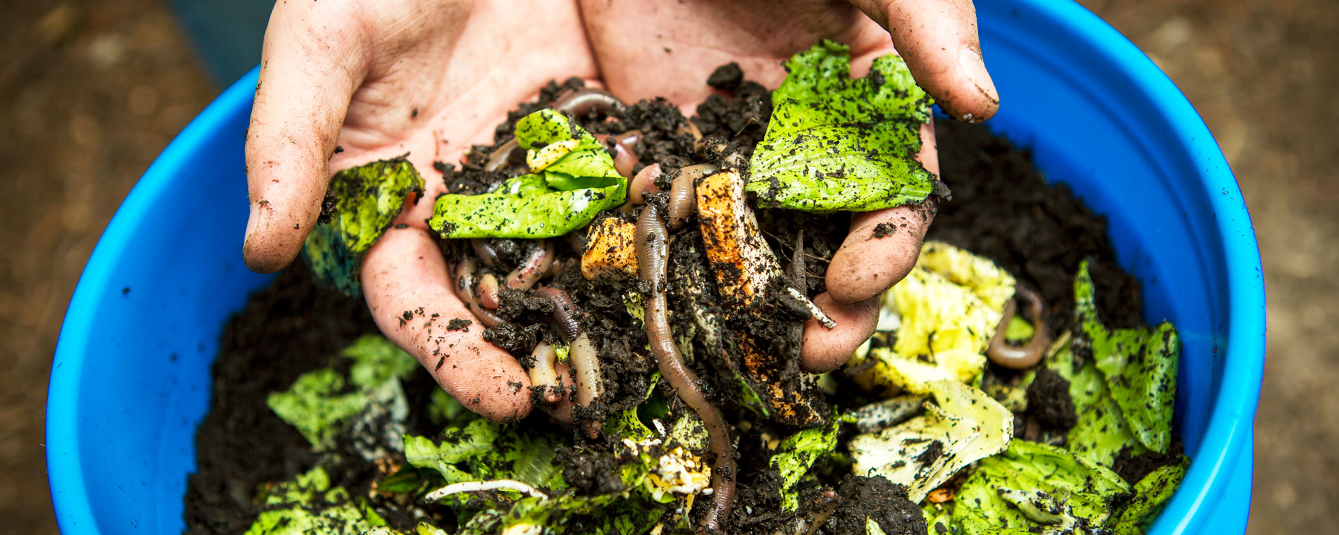 last year saw numerous attempts to tackle food waste in the uk and yet despite the tinderstyle food sharing apps