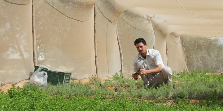 Farming Fish and Lettuce in the Egyptian Desert