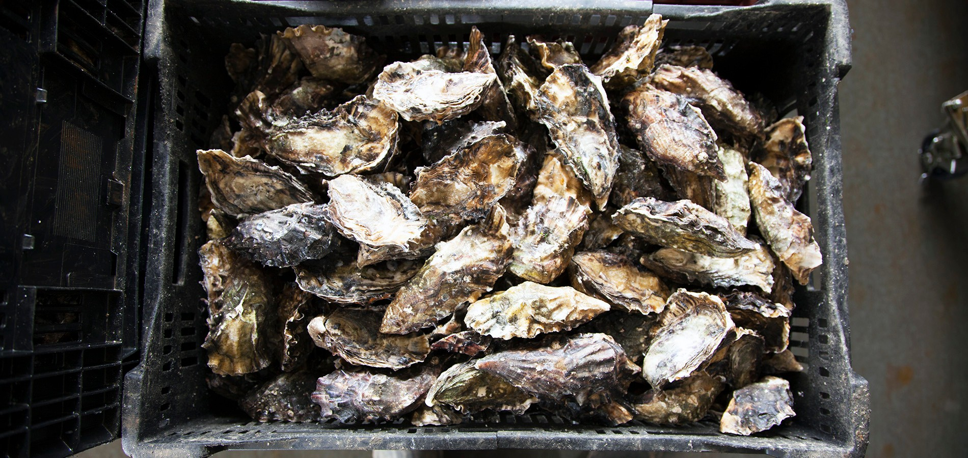 shuck-this-oysters-5
